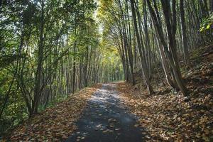 Pequeña carretera de montaña en otoño con hojas caídas de plantas foto
