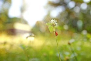 Fondo de naturaleza hermosa con hierba fresca de la mañana y mariquita. foto