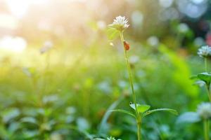 hermoso fondo de naturaleza con hierba fresca de la mañana y mariquita foto