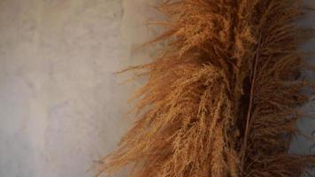 ramas secas de juncos en el interior. decoración de la habitación de estilo escandinavo foto