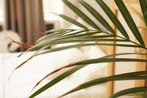Living space or hotel room in a Scandinavian style. Green plant photo