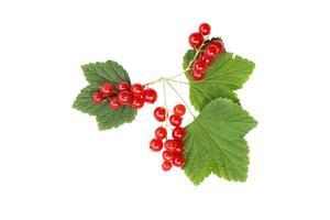 Frutos de grosella roja aislado sobre fondo blanco. foto