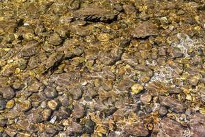Guijarros bajo la superficie del agua de un arroyo como fondo foto