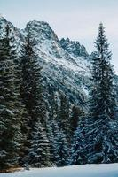 Mountains trees covered with snow.The trees are frozen.For background photo