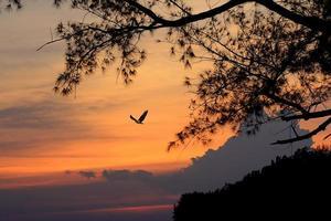 pájaro volando por la noche foto