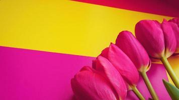 Tulipanes de color rosa sobre un fondo de colores con espacio de copia foto
