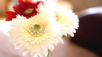 Flor de gerbera aislada con fondo borroso soleado foto