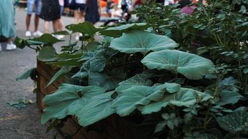 Community gardening. Urban vegetable garden in a public place photo