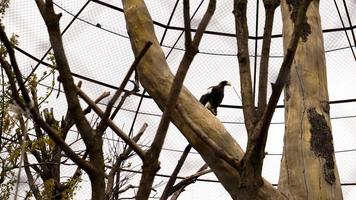 White-tailed eagle in a zoo cage. Aviary for birds with trees photo