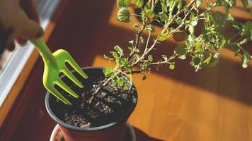 plantar jardín de flores. macetas en el alféizar de la ventana foto