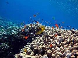 Beautiful coral reefs of the Red Sea photo