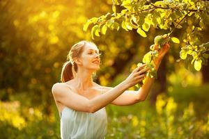 Happy woman picks an apple from a tree photo