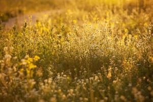 Flower meadow in the rays of the sun photo