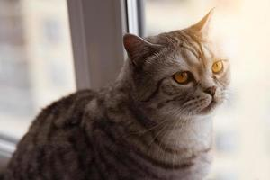 Big cat sitting near the window photo