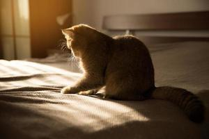 Cat sits on a bed in the rays of the sun photo