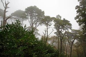 Landscape with big trees in the fog photo