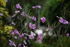 pequeñas flores rosadas en tallos delgados foto