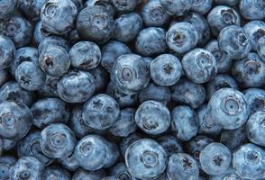 arándanos como fondo de alimentos naturales foto
