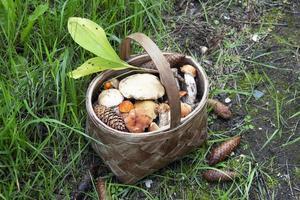 champiñones en una canasta. cosecha de hongos comestibles en el bosque. foto