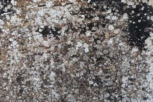 Gray stone surface with mold spots photo