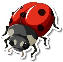 A sticker template with a red ladybug isolated vector