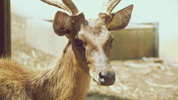 Close deer face. Close up deer photo