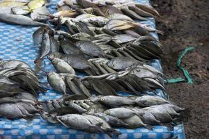 The assorted raw seafoods photo