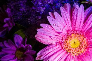 Vista superior de la margarita de gerbera rosa de cerca con gotas de agua foto