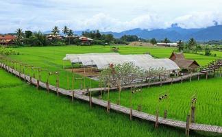 Green fields in the rainy season and bamboo bridges photo