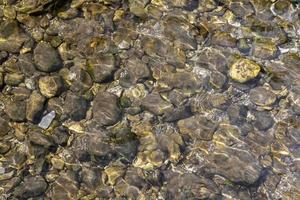 Guijarros grises en la playa del mar con algas y algas marinas secas foto