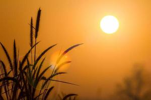 Silhouette grass at sunrise with lens flare photo