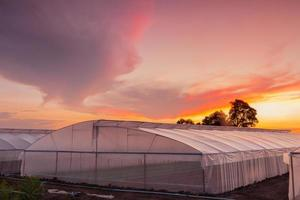 green house in farm at beautiful sunset photo