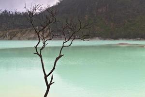 rama de árbol junto al lago foto