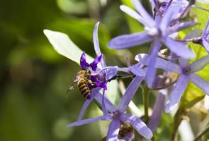 abeja y flor morada foto