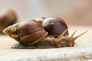 two snail crawling on the marble table photo