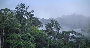 Foggy morning in the bushy forest and mountains layer. photo