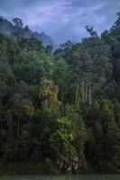 bosque tupido en el bosque tropical selva profunda sobre un fondo de cielo nublado foto