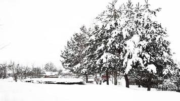 Countryside and nature in winter. A lot of snow after a snowfall photo