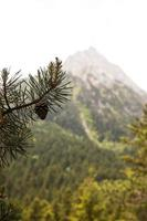 The beautiful mountain forest landscape photo