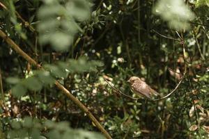 The close up cute bird woods photo