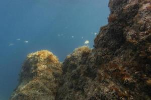 The beautiful underwater landscape view photo