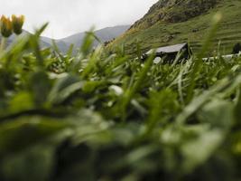 cerrar detalles campo de hierba foto