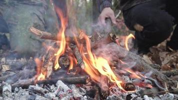 Close up Of Campfire in The Forest video