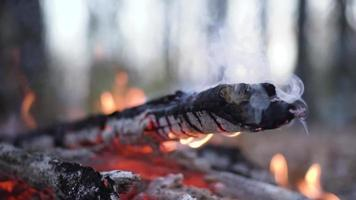 A Close up Of a Campfire in The Forest video