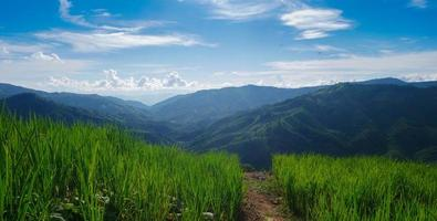 Green rice fields and blue sky photo