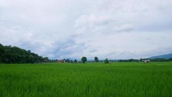 Green rice fields and cloudy sky photo