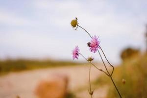 Cerca de abeja encima de una flor foto