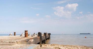 Seagulls flock at the Black Sea shoreline photo