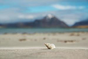 Sea shells on a sandy beach against background of sea and mountains photo