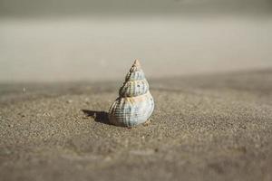 Sea shell on sandy beach photo